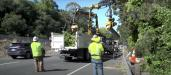 Some of these trees are determined to be dead, dying, diseased or structurally deficient and are marked for removal.