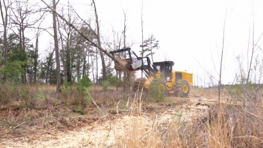 A Cat 563C feller buncher, equipped with a FAE 200/U 225 TX mulching  attachment, in action.