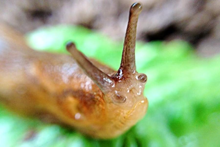This is a caption of a slug.