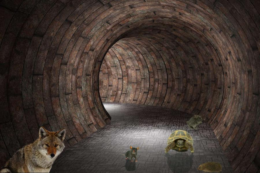 An integral feature of the wall will be wildlife-crossing tunnels located every mile along the wall. These tunnels, which will number 1,989, will measure three feet high and four feet wide, permitting armadillos, coyotes and other critters to pass safely along their migratory routes north and south of the border.