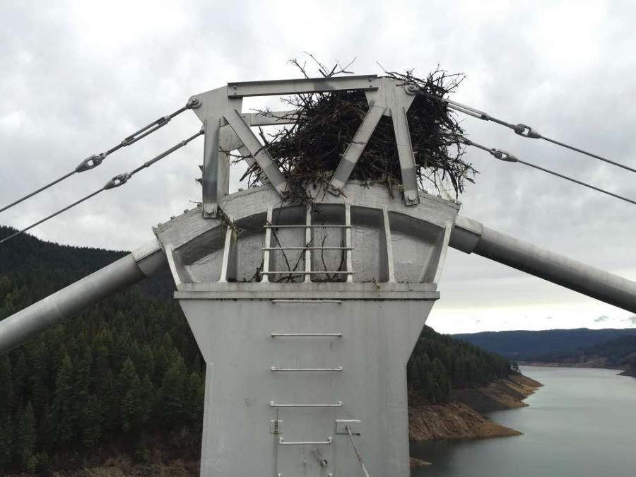 The osprey nest on the bridge before the new platforms were installed.