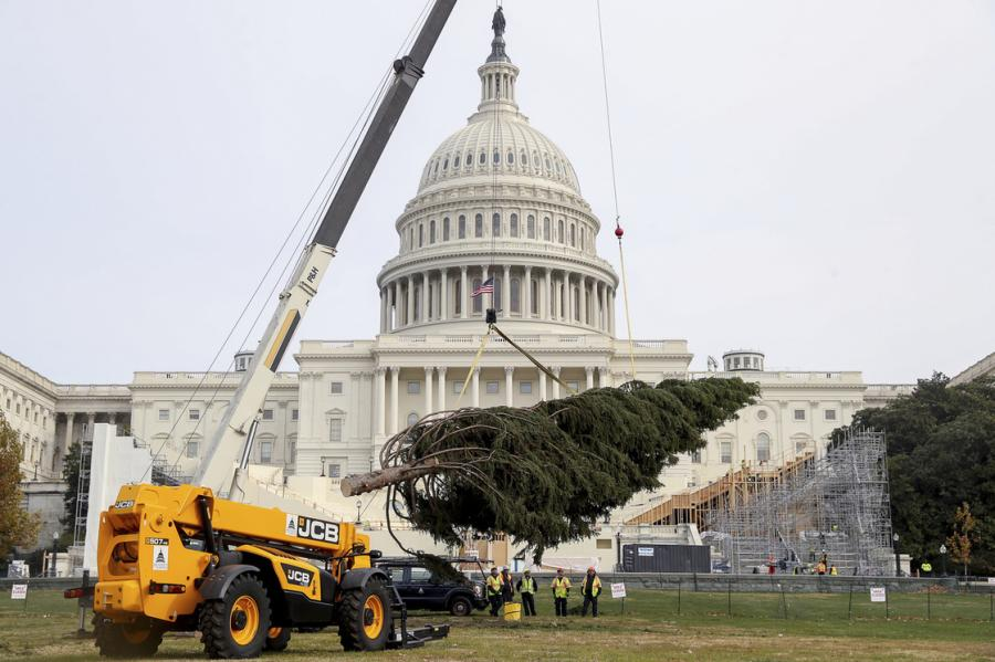 The JCB 507-42 Loadall was called in to perform the honors of assisting with the installation of an 80-foot Engelmann spruce on the lawn at Capitol Hill in Washington, DC.