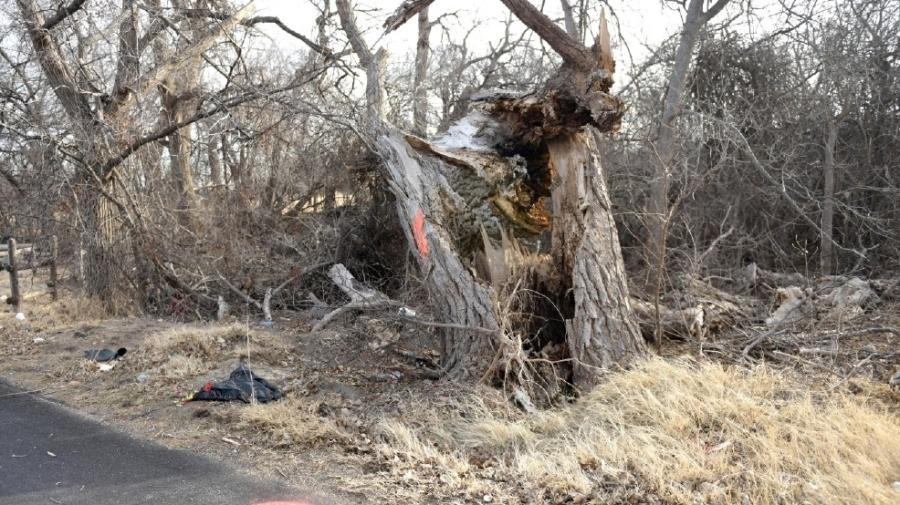 TxDOT says dead Canadian trees set to be cut down starting Jan. 2. KVII