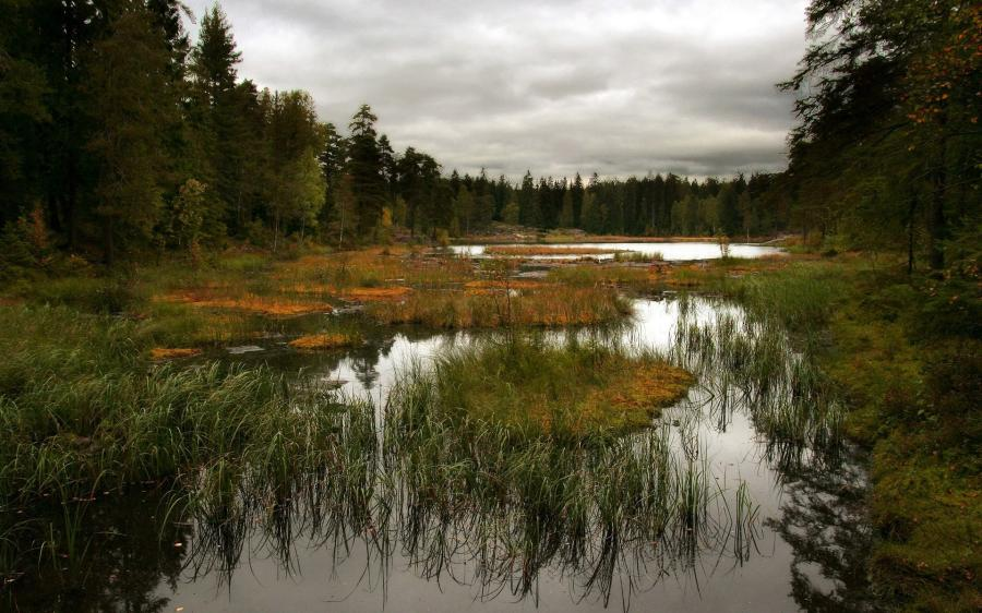 Flooding has caused several bogs made up of muck, cattails, tall grass and other vegetation to break free.