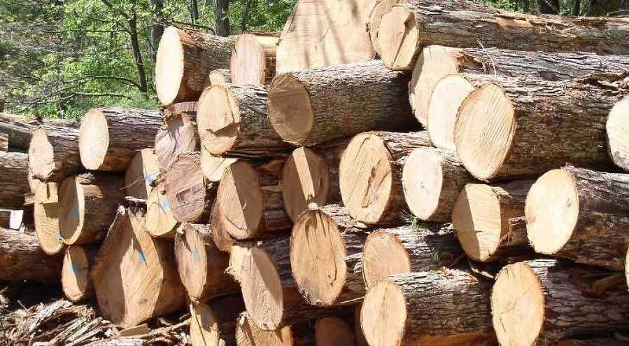 """There's a lot of acres, millions of acres, in wood — and that's a lot of money, waiting for the next product,"" Burr said."