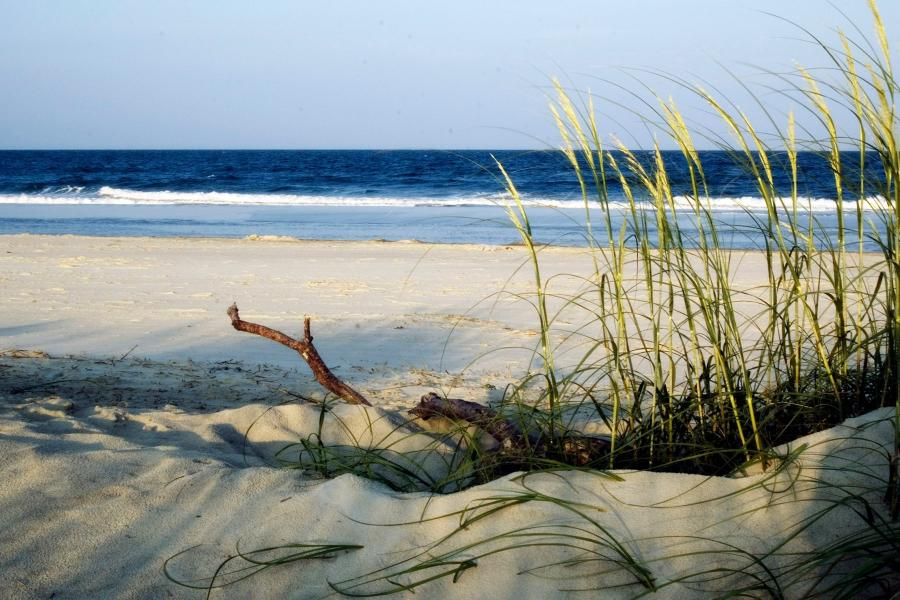 City council on Tybee Island voted Jan. 25 to advance plans for a new dune system design and landscape.  (visittybee.com photo)
