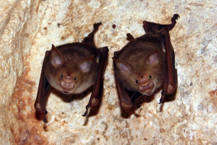 The Interstate 75 bridge near Calhoun averages 72,000 vehicles a day, yet it also doubles as the largest known bridge-roost for bats in Georgia.