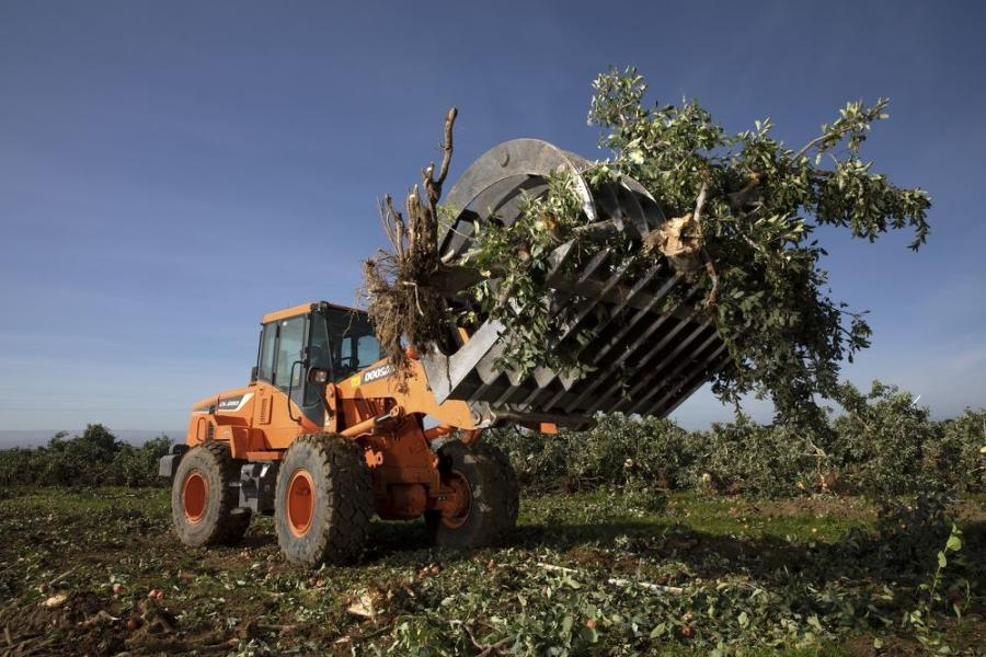 Ziemke uses the two DL250-5 wheel loaders to pick up trees and transport them to a grind or a burn pile. One wheel loader is equipped with an optional rearview camera for better visibility on the farm, while the other has a high-lift option to easily load the material into high-sided trucks.