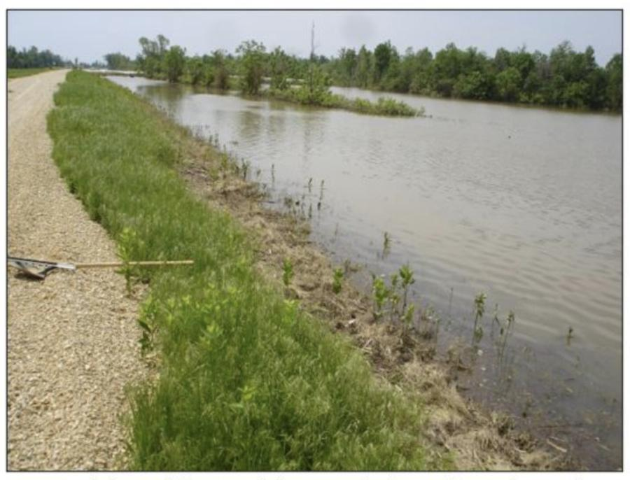 St. Francis River Mainline Levee during a recent flood event along the project location. (USACE photo)